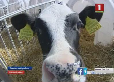 В Могилевской области проблемы в  молочно-товарных комплексах У Магілёўскай вобласці праблемы ў  малочна-таварных комплексах