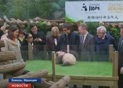4-месячная панда в зоопарке Боваля порычала на первую леди Франции Брижит Макрон 4-месячная панда ў заапарку Баваля парыкала на першую лэдзі Францыі Брыжыт Макрон