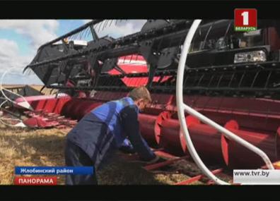 Каравай-2017 прибавляет в весе Каравай-2017 дадае ў вазе Grain yield 2017 continues to grow