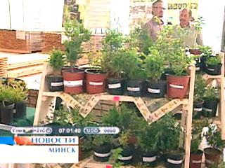 Продукция из белорусского леса станет доступнее Прадукцыя з беларускага лесу стане больш даступнай Belarusian timber to become more available