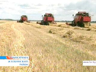 В Гомельской области уборочная кампания набирает обороты У Гомельскай вобласці ўборачная кампанія набірае абароты