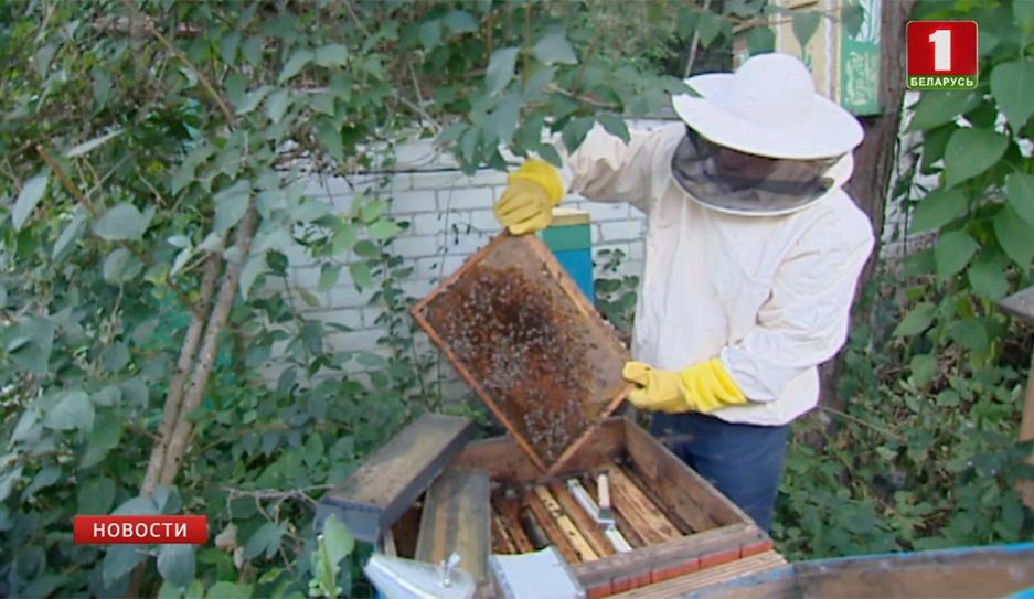 У православных сегодня - Медовый Спас У праваслаўных сёння - Мядовы Спас Orthodox celebrate Savior of the Honey Feast Day