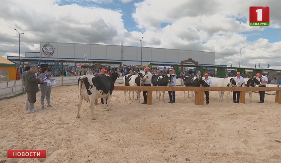 Лучшая буренка страны -  корова Малышка -  дает 14 тонн молока в год  Лепшая карова краіны  дае 14 тон малака за год  Country's best cow produces 14 tons of milk per year