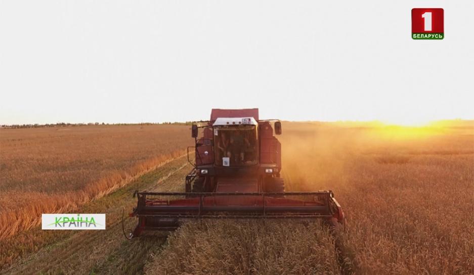 Аграрии страны приближаются к 5 миллионам тонн зерна Аграрыі краіны набліжаюцца да 5 мільёнаў тон збожжа