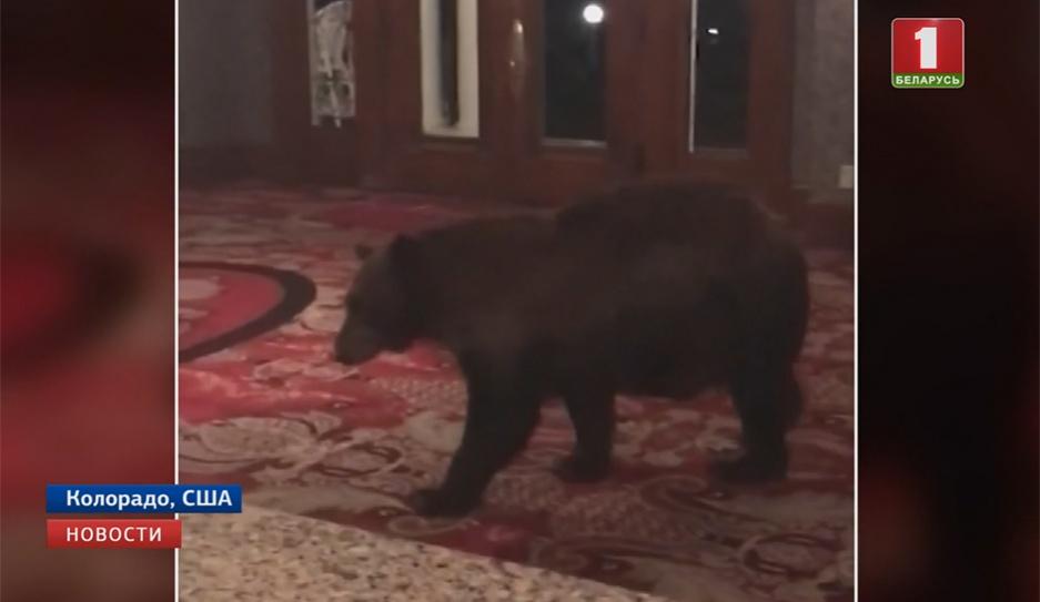 Необычный постоялец нагрянул в один из отелей штата Колорадо