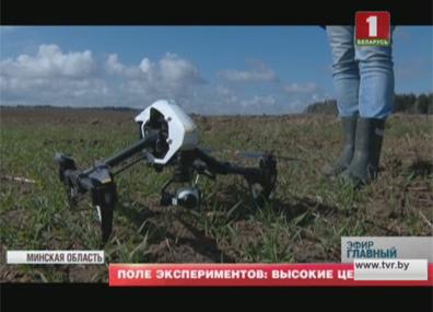 Белорусские HT-всходы на экспериментальном поле  Беларускія HT-усходы на эксперыментальным полі