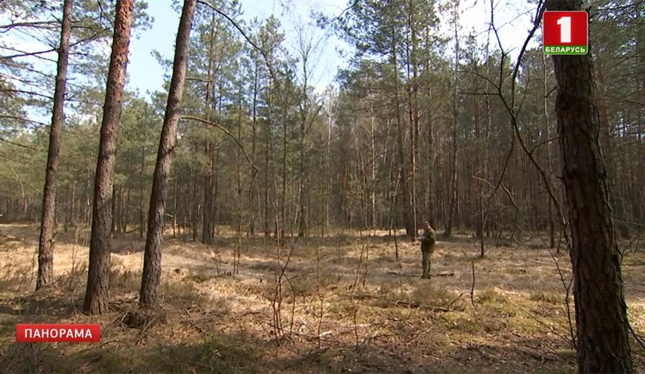 Начинается пожароопасный период в лесах. В Брестской области для мониторинга ситуации используют дроны Пачынаецца  пажаранебяспечны перыяд у лясах. У Брэсцкай вобласці для маніторынгу сітуацыі выкарыстоўваюць дроны