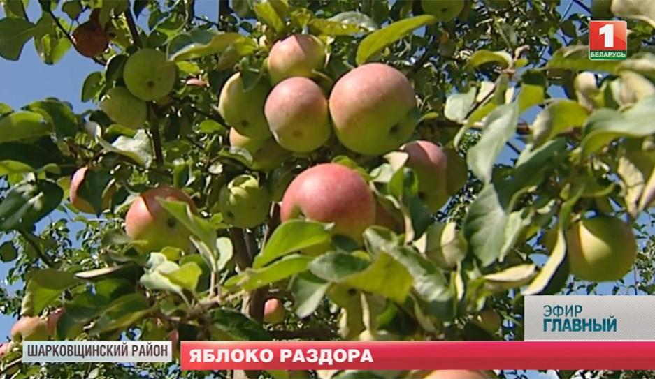 Можно ли хорошо заработать на яблоках? Ці можна добра зарабіць на яблыках?