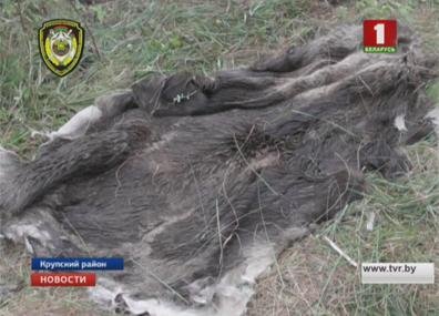 Двоих браконьеров задержали в Борисовском районе Дваіх браканьераў затрымалі ў Барысаўскім раёне