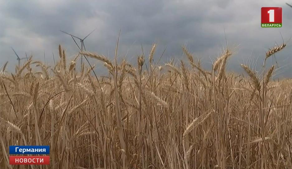 Сельхозпредприятия Германии терпят убытки из-за жары