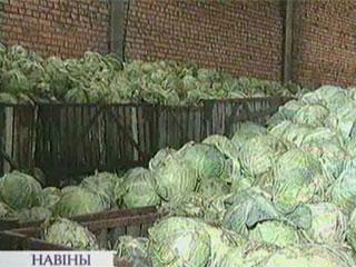 Заготовка овощей и фруктов для столичных потребителей в этом году будет уменьшена Нарыхтоўка гародніны і садавіны для сталічных спажыўцоў сёлета будзе зменшана