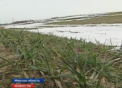 Сельхозорганизации Беларуси в этом году планируют получить свыше 9 миллионов тонн зерна Сельгасарганізацыі Беларусі сёлета плануюць атрымаць звыш 9 мільёнаў тон збожжа