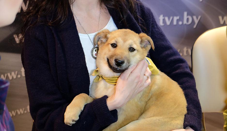 """Онлайн-конференция на тему: """"Как найти свой дом бездомной собаке?"""""""