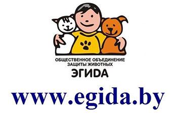 "Онлайн-конференция с председателем общественного объединения ""Эгида"""