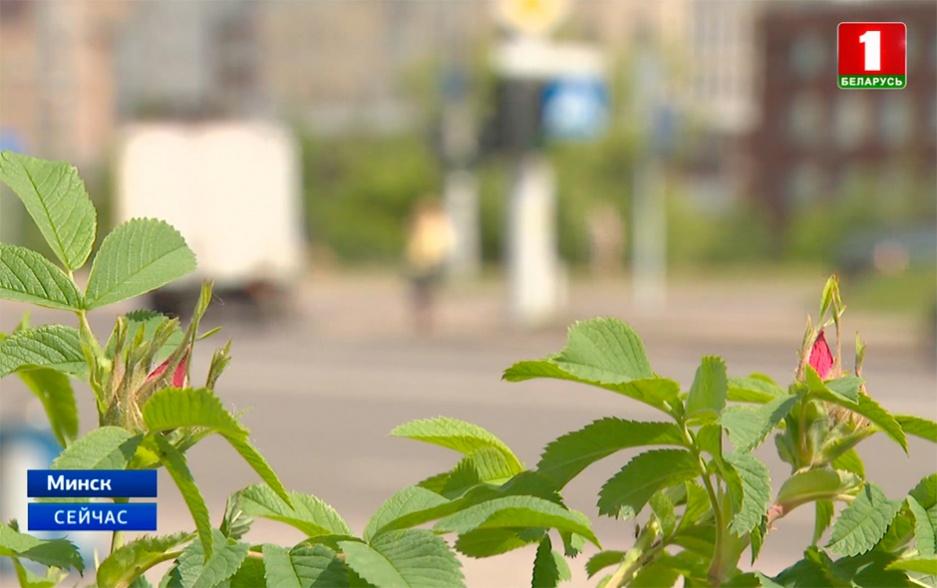 В выходные в Беларуси ожидается настоящее лето У выхадныя ў Беларусі чакаецца сапраўднае лета