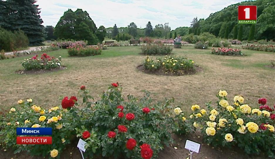 Симфония роз в эти выходные в столичном ботаническом саду Сімфонія руж у гэтыя выхадныя ў сталічным батанічным садзе