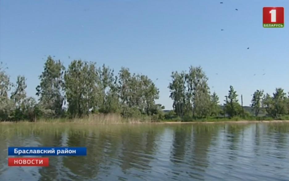 """Расплодившиеся бакланы массово уничтожают рыбу в Нацпарке """"Браславские озера""""  Бакланы, якія распладзіліся, масава знішчаюць рыбу ў Нацпарку """"Браслаўскія азёры"""""""