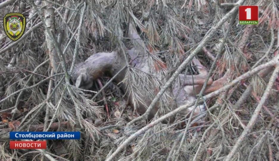Охота с последствиями. 11 человек подозревают в браконьерстве Паляванне з наступствамі. 11 чалавек падазраюць у браканьерстве