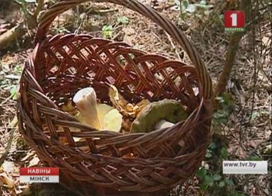 Cтартовал cезон грибов Cтартаваў cезон грыбоў