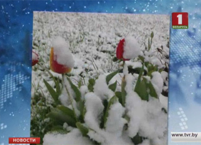 Очередной температурный рекорд установлен в Гомеле  Чарговы тэмпературны рэкорд пастаўлены ў Гомелі