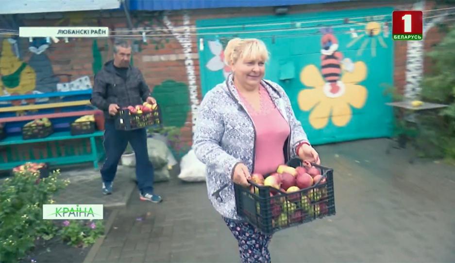 Более пяти тысяч тонн яблок собрано с подворий в Минской области Больш за пяць тысяч тон яблыкаў сабрана ў Мінскай вобласці