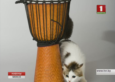 Сегодня в мире отмечают день кота Сёння ў свеце адзначаюць дзень ката