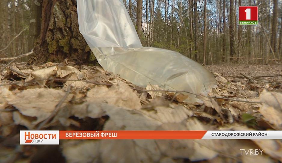 В Минской области начался сбор березового сока
