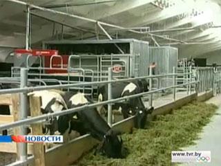 К 2015-му году планируется выйти на объем 10 миллионов тонн молока в год Да 2015 года плануецца выйсці на аб'ём 10 мільёнаў тон малака за год 10 million tons of milk per year to be produced in Belarus by 2015