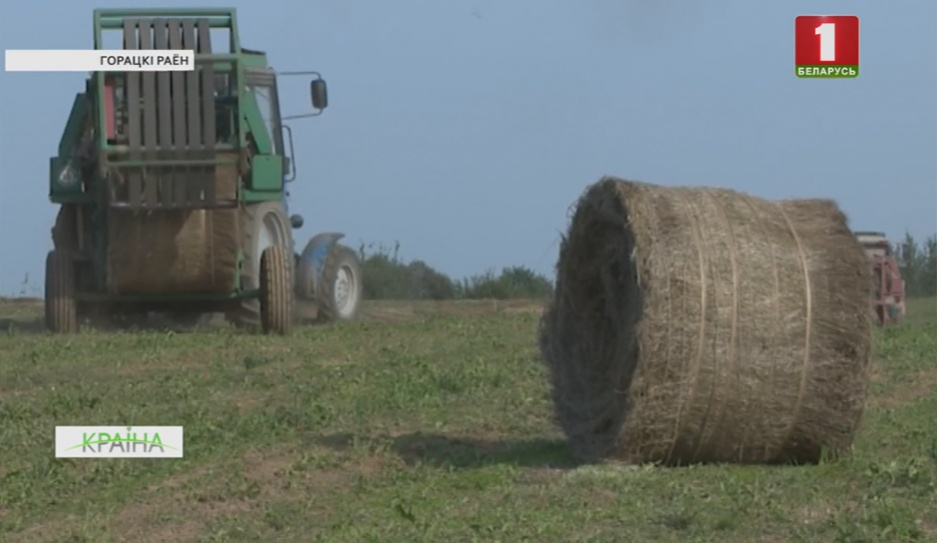 У аграриев Беларуси горячая пора: убирают кукурузу, лен, сорго У аграрыяў Беларусі гарачая пара працягваецца