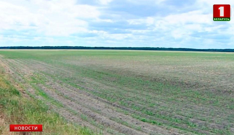 Отсутствие дождей и сухие почвы сказываются на аграрной сфере Адсутнасць дажджоў і сухія глебы адбіваюцца  на аграрнай сферы