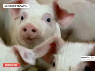 К 2015 году Минская область полностью восстановит объемы производства свинины Да 2015 года Мінская вобласць поўнасцю адновіць аб'ёмы вытворчасці свініны Minsk region to fully restore the production of pork by 2015