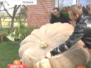 Тыква весом почти 600 килограммов Гарбуз вагой амаль 600 кілаграмаў