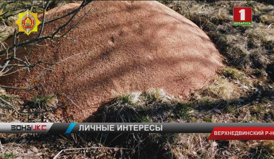 Аграрий из Верхнедвинского района  каждую 10-ую тонну зерновых планировал забирать себе