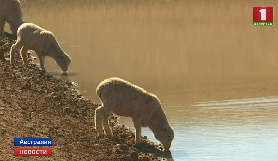 Австралия переживает сильнейшую за последние 50 лет засуху