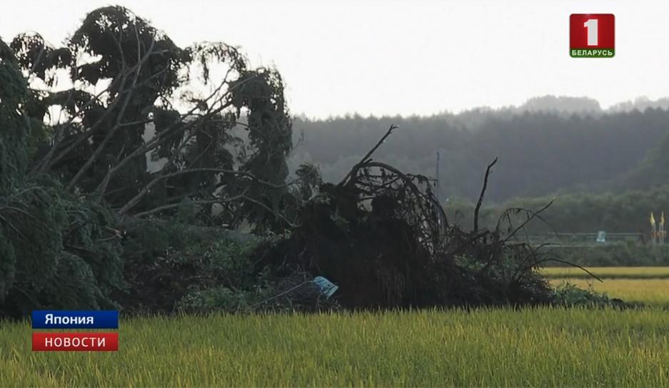 Число жертв землетрясения в Японии выросло до 8 Колькасць ахвяр землетрасення ў Японіі вырасла да 8
