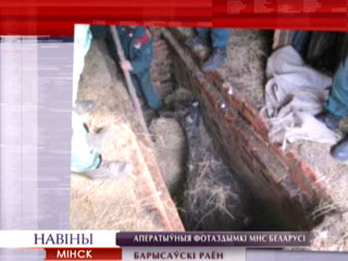 Операция Крупное рогатое животное Аперацыя Буйная рагатая жывёла