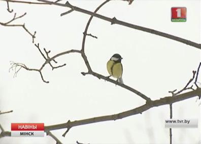 Минская область развивает бердвотчинг Мінская вобласць развівае бёрдвотчынг