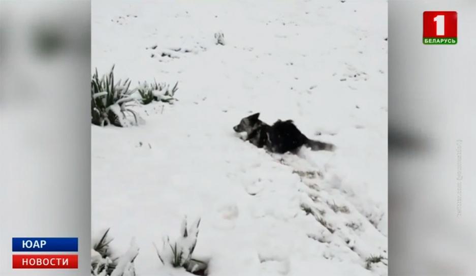В Южной Африке внезапно выпал снег