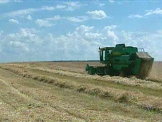 Аграрии центрального региона намолотили 500 тысяч тонн зерна Аграрыі цэнтральнага рэгіёна намалацілі 500 тысяч тон збожжа