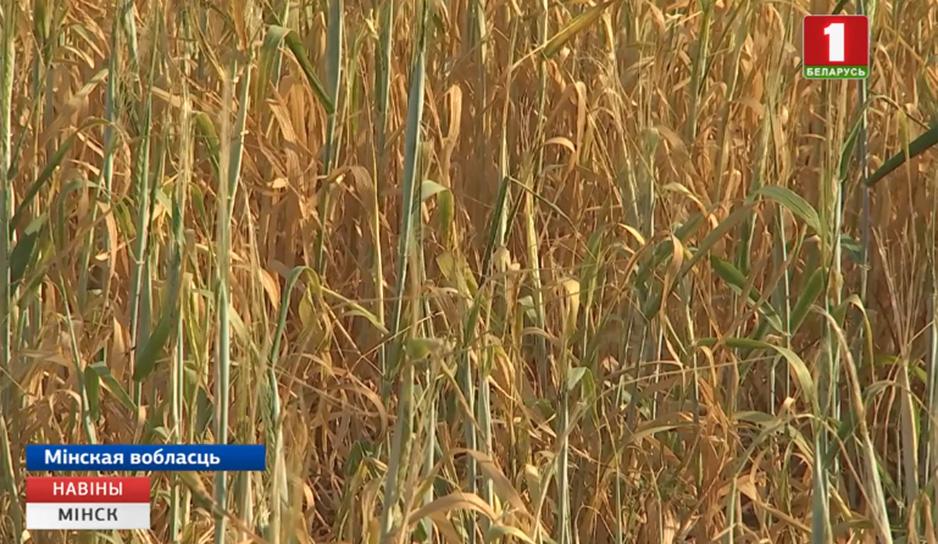 Сельхозорганизации Минской области начали второй укос трав