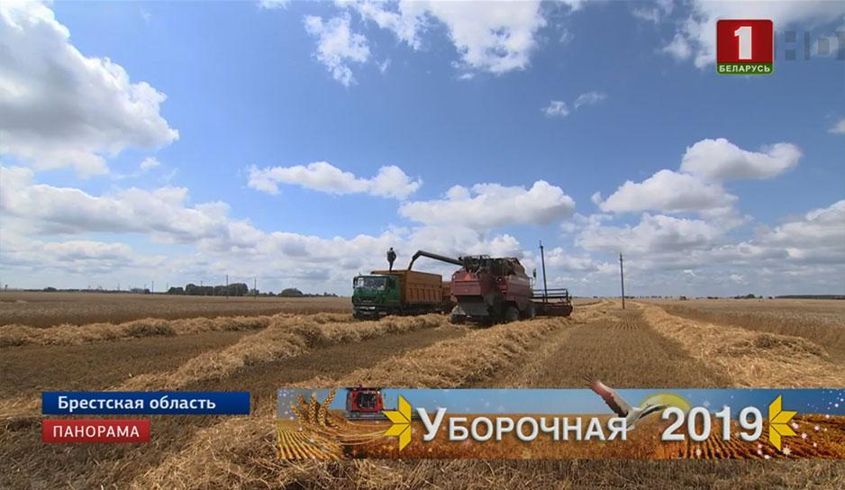В восточных районах страны борются с проблемой полеглости на полях