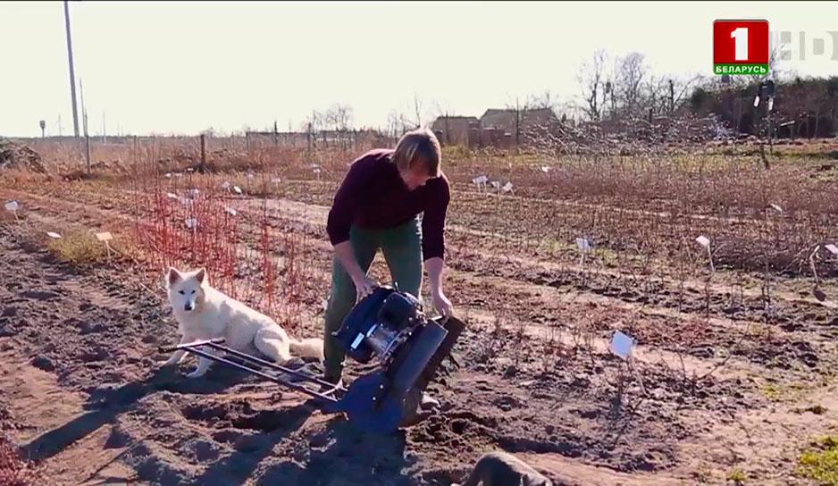 Культиватор - сельскохозяйственная машина для обработки почвы: рыхления, борьбы с сорняками, окучивания и влагосбережения.