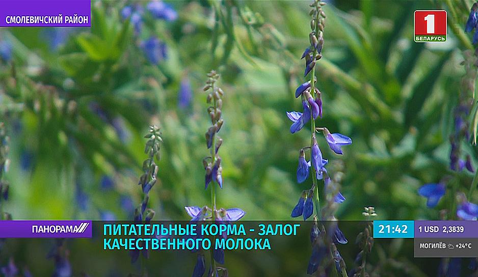 Аграрии Минской области уже убрали около 30 % площадей