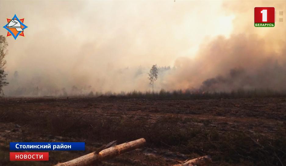 Минлесхоз инициирует введение запрета на посещение лесов по всей Беларуси.jpg