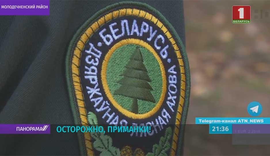 В Беларуси проводят авиавакцинацию диких животных против бешенства