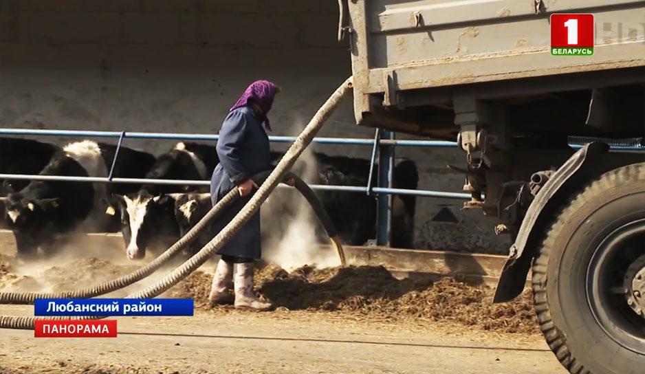 Гибель более сотни голов крупнорогатого скота пытался скрыть руководитель агропредприятия.jpg