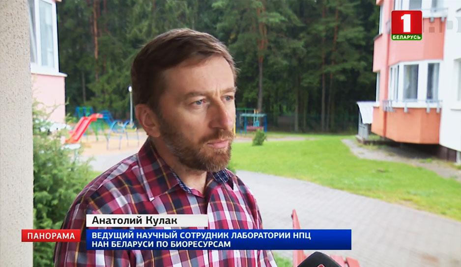 В Беларуси участились случаи нашествия ос
