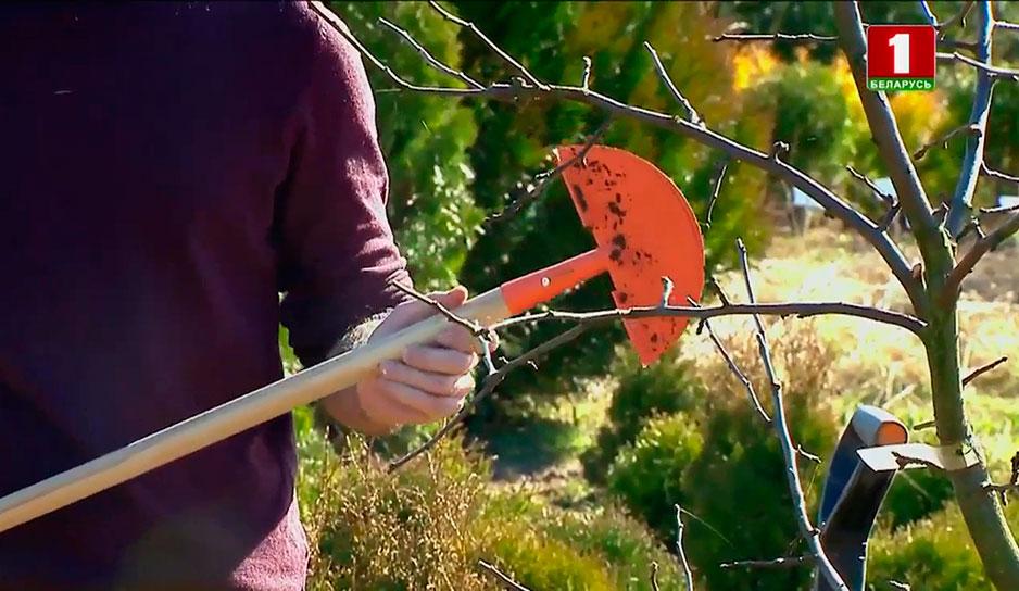Секатор или садовые ножницы изобрели в 1815 году во Франции и впервые обрезали виноградную лозу.