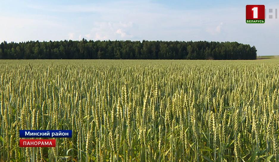 Аграрии принимают меры, чтобы минимизировать потери из-за аномально жаркой погоды.jpg