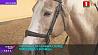 Чемпионат по конному спорту проходит в Ратомке Чэмпіянат па конным спорце праходзіць у Ратамцы